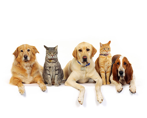 Compare pet insurance policies