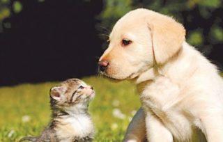 Pet Insurance Plan