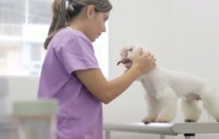 necessity of dog insurance