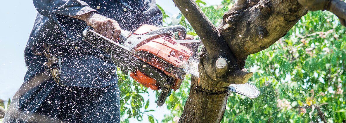 qualified and accredited by the government is basically required. Search on internet to locate Tree Service.