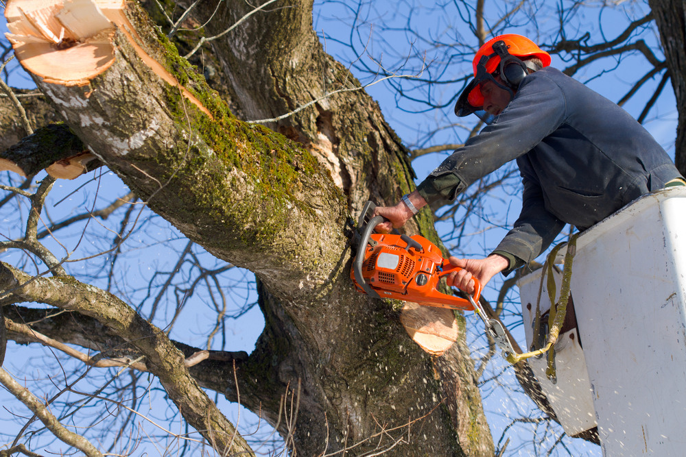 Get the professional Tree Trimming Service