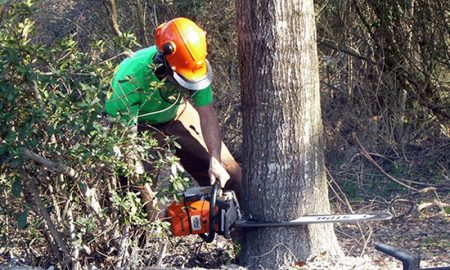 cheap and best tree service
