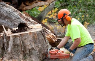 How to hire a cheap and best tree service for your property