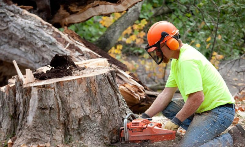 Significant importance of hiring tree service company