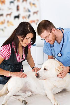 dog's immune system